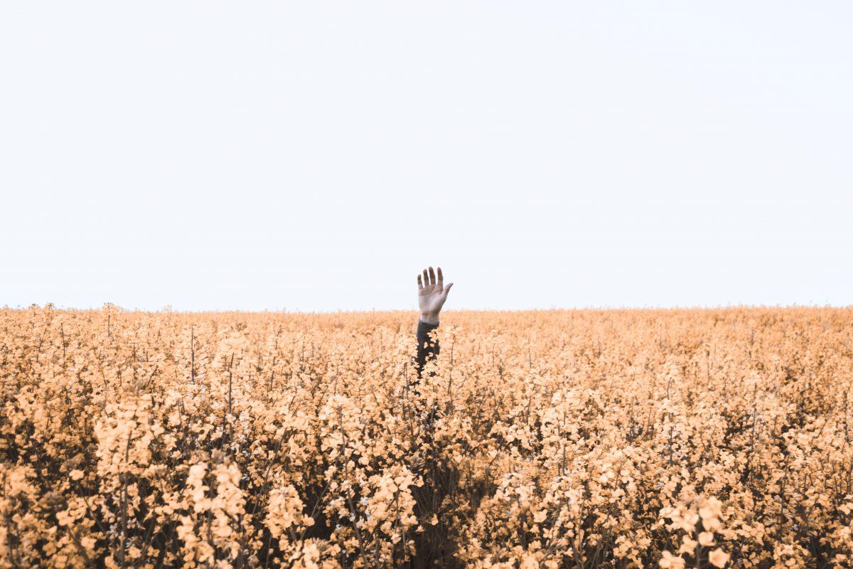 Hand wird aus Blumenfeld nach oben gestreckt